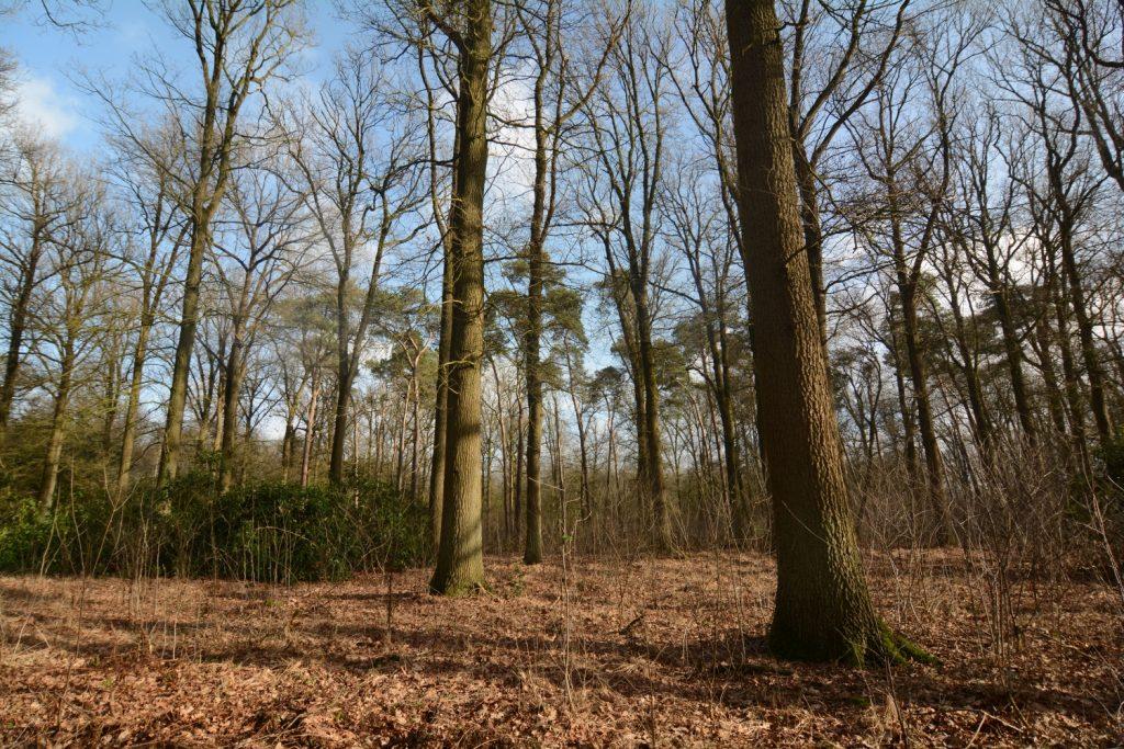 Natuurgebied Den Rooy in Meerle