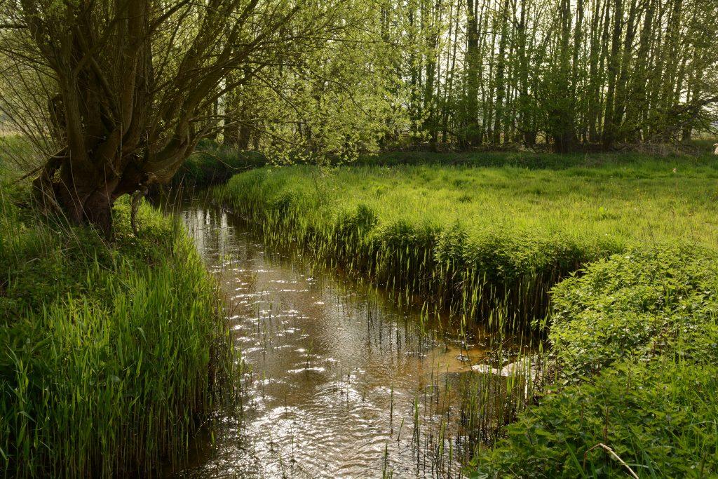 Natuurgebied De Halsche Beemden