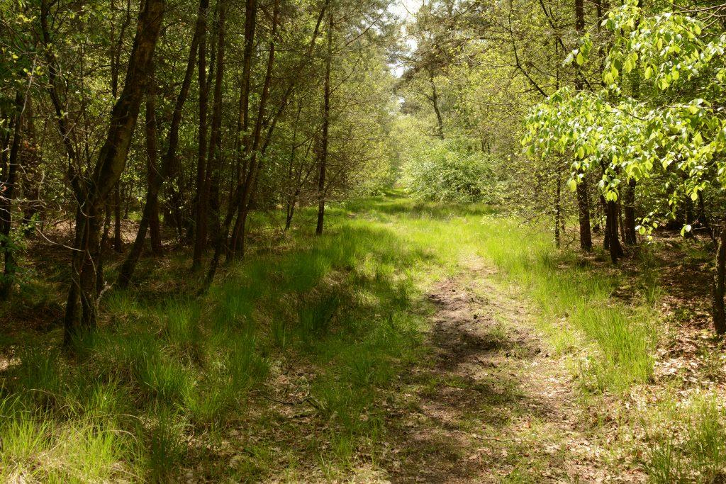 Natuurgebied Den Rooy
