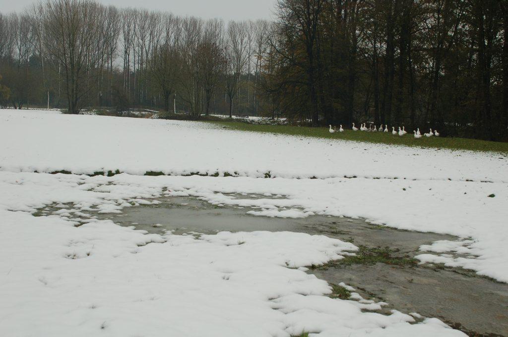 Sneeuw Paterswiel Meersel-Dreef