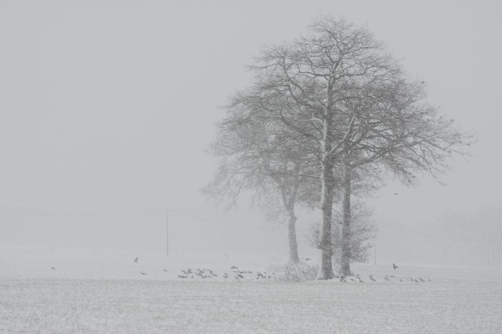 Castelreesche Heide