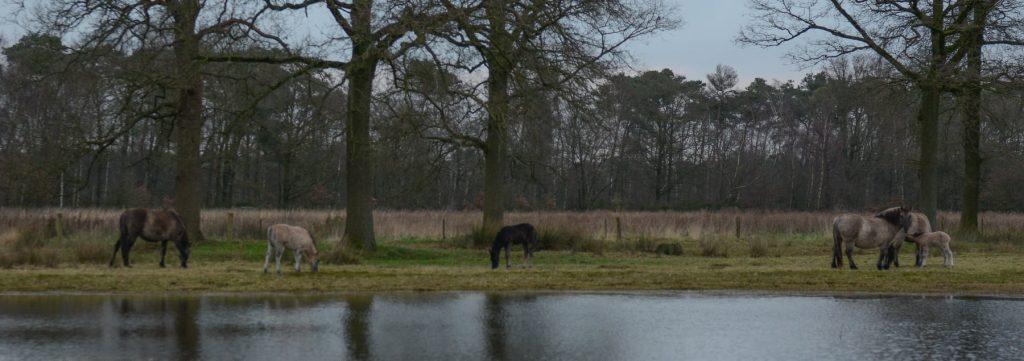 Foto: © Wim Verschraegen